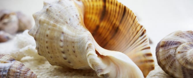 Using Symbolism in Fiction - Conch Shell from Lord of the Flies